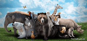 Read more about the article जानवरों के 100 रोचक तथ्य – Amazing Facts In Hindi About Animals