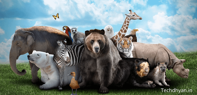 Amazing Facts about animals in hindi जानवरों के रोचक तथ्य Facts Amazing Facts In Hindi about animals Interesting facts about animals in hindi